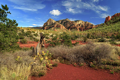 Photograph - Some Cactus In Sedona by James Eddy