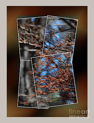 Photograph - Some Of The Colors Of Nature II by Jim Fitzpatrick