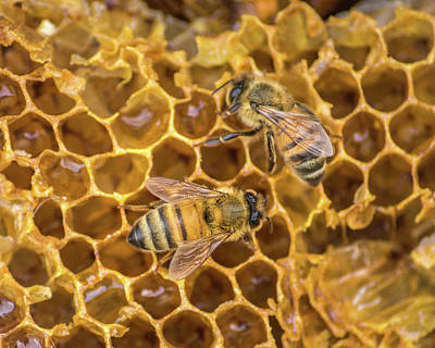 Art Print featuring the photograph Some Of Your Beeswax by Bill Pevlor