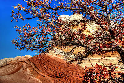 Photograph - Some Tree In The Desert by David Andersen