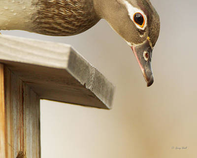 Photograph - Someone Is Setting On My Eggs by Gerry Sibell