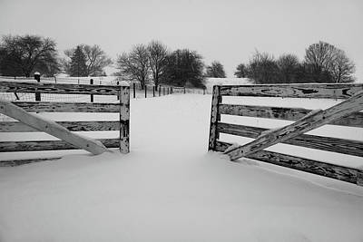 Photograph - Someone Left The Pasture Gate Open by Scott Kingery
