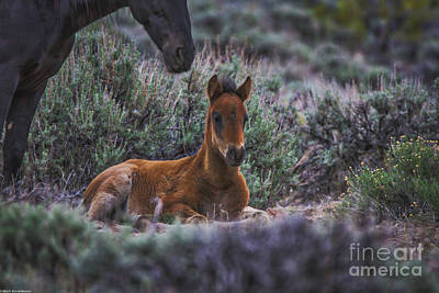 Open Impressionism California Desert - Someone To Watch Over Me by Mitch Shindelbower