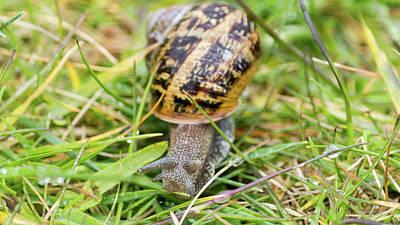 Photograph - Somerset Snail In The Grass A by Jacek Wojnarowski