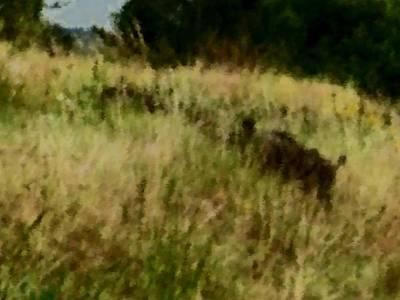 Something Is In Dry Grass Original by Lenka Rottova