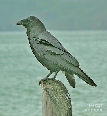 Something To Crow About Art Print