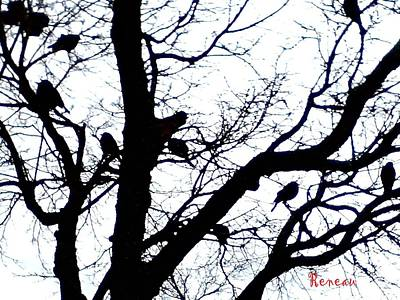 Photograph - Something To Crow About by Sadie Reneau