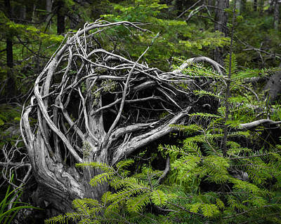 Photograph - Something Wicked In The Woods by Bill Pevlor