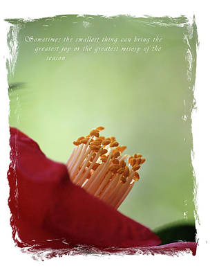 Photograph - Sometimes by Cathy Harper