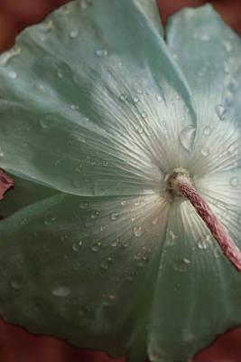 Rainy Day Photograph - Sometimes Sad by The Art Of Marilyn Ridoutt-Greene