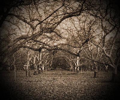 Photograph - Somewhere by Joe Fernandez