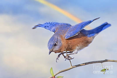 Bluebird Of Happiness Photograph - Somewhere Over The Rainbow by Bonnie Barry