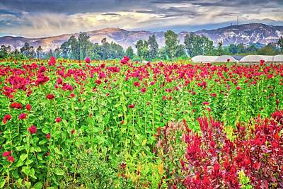 Photograph - Somis Flower Fields by Lynn Bauer
