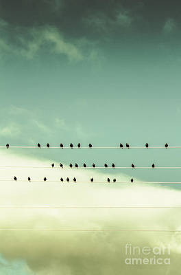 Music Score Photograph - Song Birds On Five Lined Staff by Jorgo Photography - Wall Art Gallery