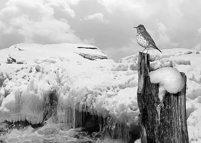 Digital Art - Song Of Spring by Spadecaller