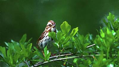 Photograph - Song Sparrow Painting by Carol Montoya