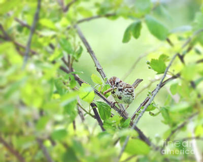 Photograph - Song Sparrow With Dinner by Kerri Farley