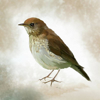 Painting - Song Thrush - Turdus Philomelos by Bamalam  Photography