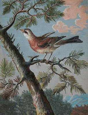 Songbird In An Evergreen Art Print by MotionAge Designs