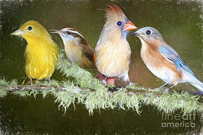 Songbird Quartet Art Print by Bonnie Barry