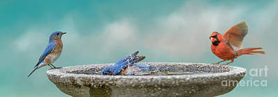 Photograph - Songbirds In Bird Bath by Bonnie Barry