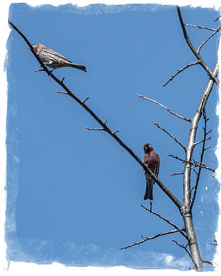 Photograph - Songbirds by Mick Anderson