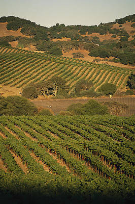 Sonoma Coast Photograph - Sonoma County Vineyards, California by Michael S. Lewis