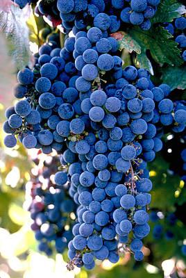 Vino Photograph - Sonoma Grapes by Bart Edson