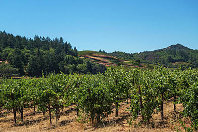 Photograph - Sonoma Valley Northern Ca by Toby McGuire