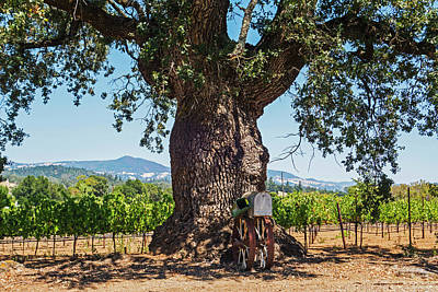 Photograph - Sonoma Valley Tree  by Toby McGuire