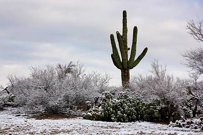 Photograph - Sonora Desert Winter by Joe Kozlowski