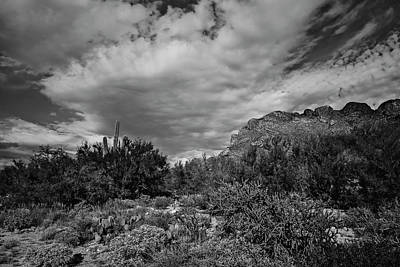 Mark Myhaver Rights Managed Images - Sonoran Afternoon bw42 Royalty-Free Image by Mark Myhaver