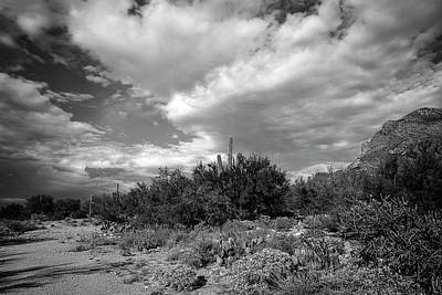 Mark Myhaver Rights Managed Images - Sonoran Afternoon h10 Royalty-Free Image by Mark Myhaver