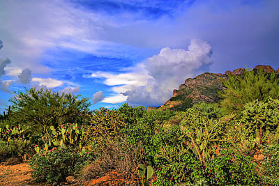 Mark Myhaver Rights Managed Images - Sonoran Afternoon h11 Royalty-Free Image by Mark Myhaver