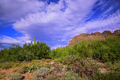 Mark Myhaver Rights Managed Images - Sonoran Afternoon h40 Royalty-Free Image by Mark Myhaver