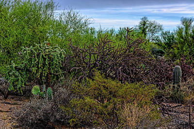 Mark Myhaver Photo Rights Managed Images - Sonoran Blend h1820 Royalty-Free Image by Mark Myhaver