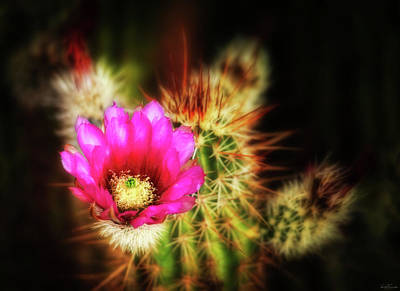 Photograph - Sonoran Bloom by Rick Furmanek