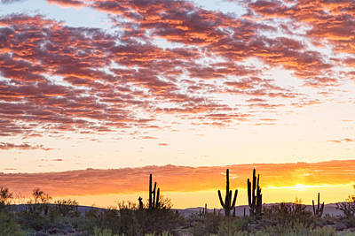 Photograph - Sonoran Desert Colorful Sunrise Morning by James BO Insogna
