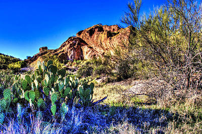 Photograph - Sonoran Desert Early Spring by Roger Passman