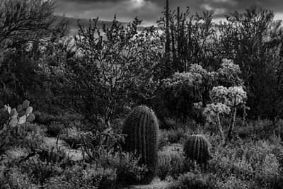 Photograph - Sonoran Desert H03 by Mark Myhaver