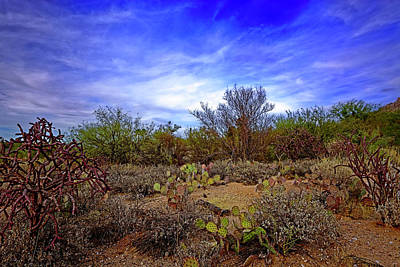 Photograph - Sonoran Desert H1819 by Mark Myhaver