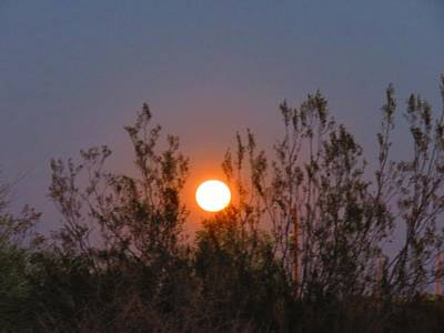 Photograph - Sonoran Desert Harvest Moon by Judy Kennedy