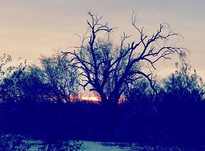 Photograph - Sonoran Desert Ironwood Sunrise by Judy Kennedy