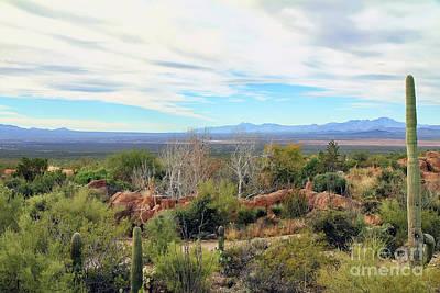 Photograph - Sonoran Desert Landscape by Teresa Zieba