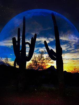Photograph - Sonoran Desert Night by Anne Sands