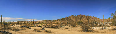 Photograph - Sonoran Desert Pano by Robert Bales