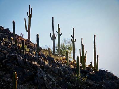 Sonoran Desert Saguaro Slope Art Print