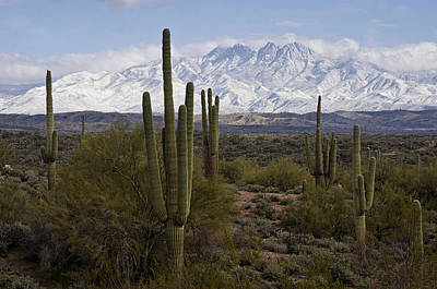 Photograph - Sonoran Desert Snow Day  by Saija Lehtonen