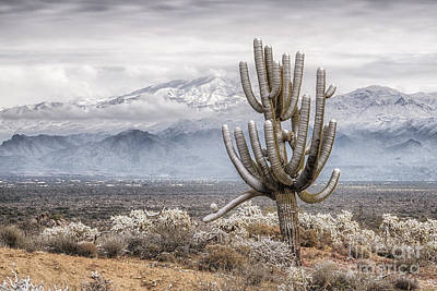 Photograph - Mcdowell Sonoran Preserve Snowstorm by Marianne Jensen