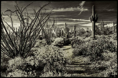 Photograph - Sonoran Desert Spring by Roger Passman